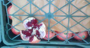 ارزانترین قیمت انار